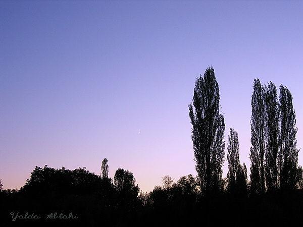 Divine evening