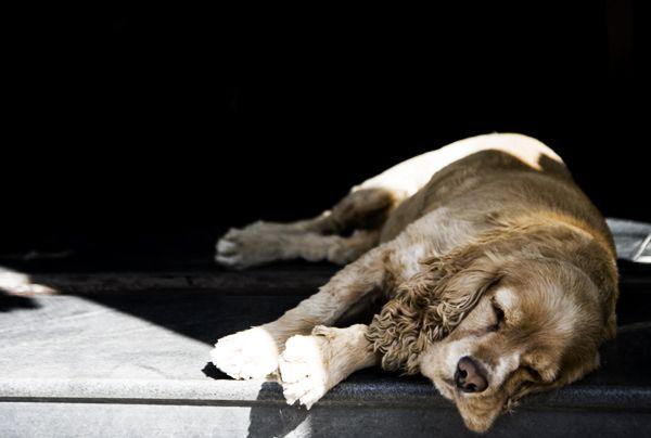 Doggie Daydreams