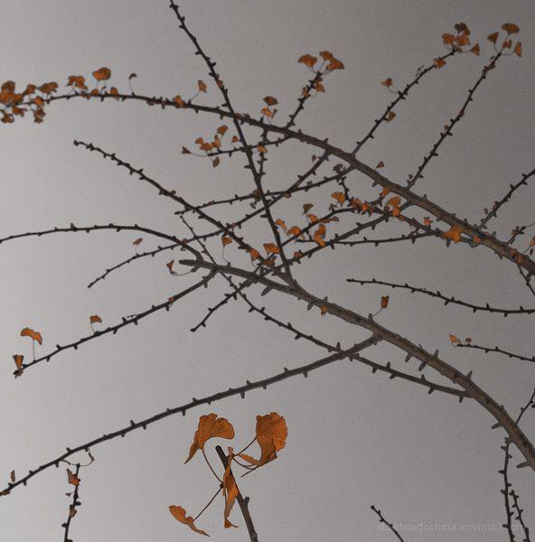 Autumn Comes
