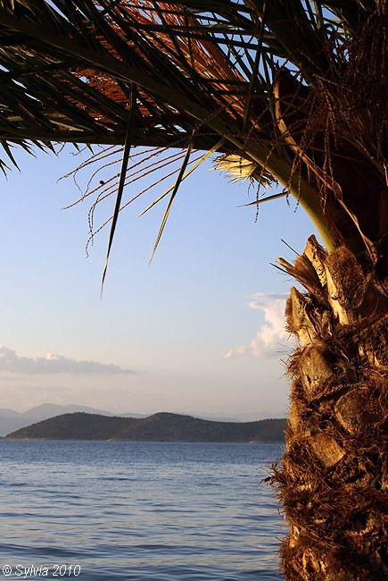 Palm - Thassos, Greece