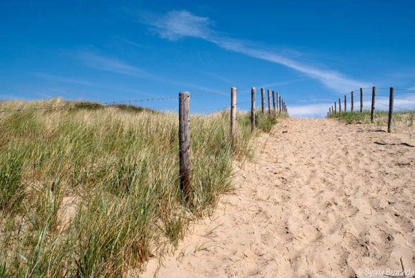Dunes - Zandvoort, The Netherlands