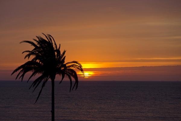 Palm tree sunset, Zandvoort, The Netherlands (1/2)