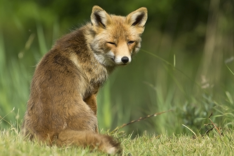 Fox - AWD, The Netherlands (1/2)