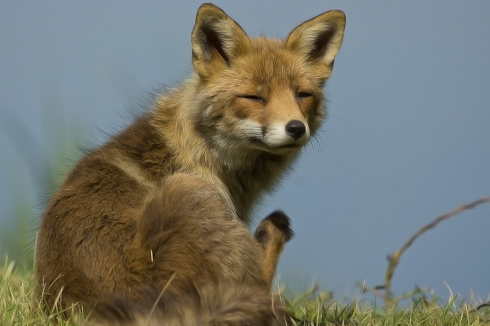 Fox - AWD, The Netherlands (2/2)