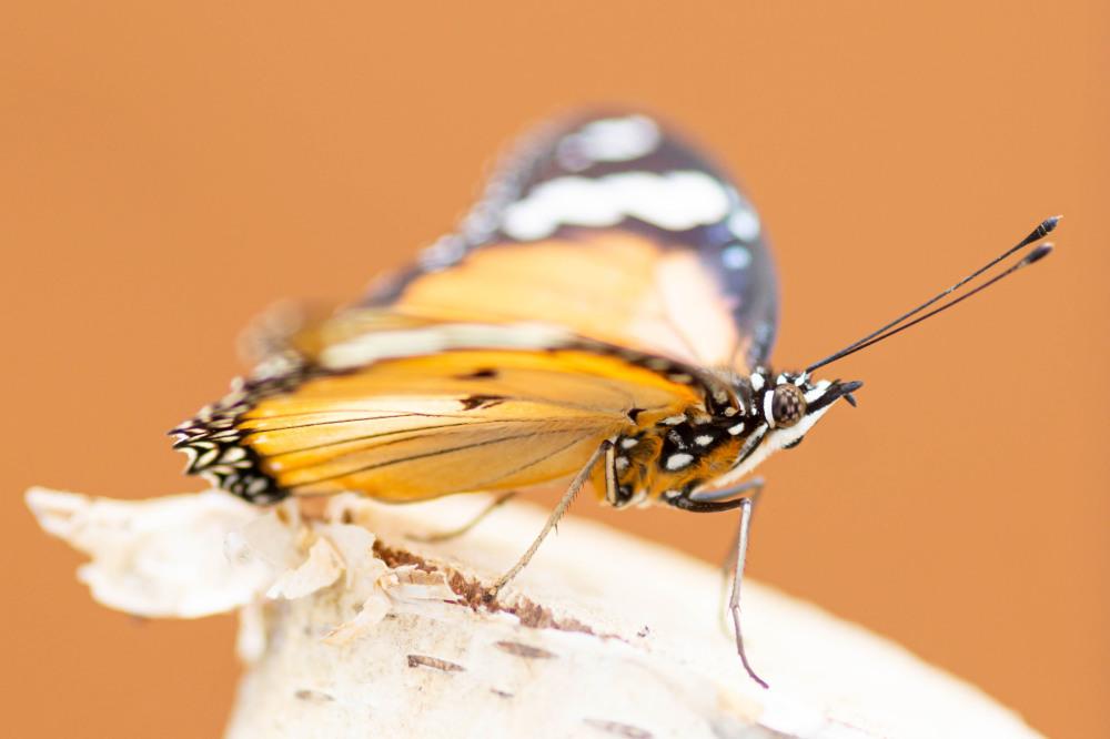 Vlindersafari (7/10)