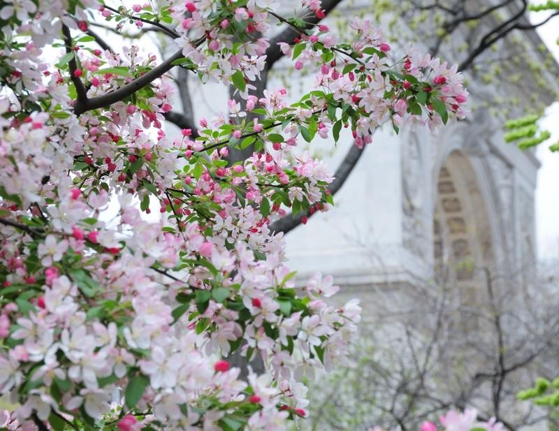 Trees near NYU