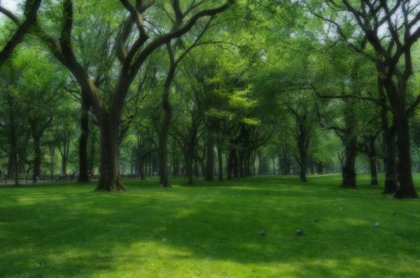 Central Park...