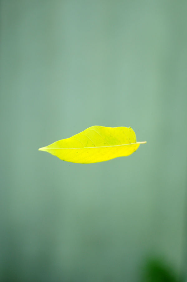 Floating Leaf