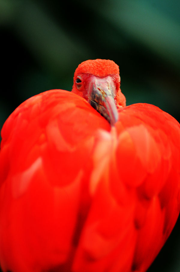 Bird at the Bronx Zoo