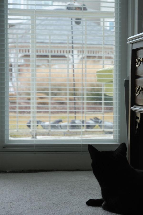 Cat's wish...open window.
