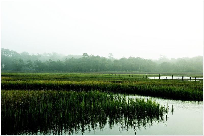 Marshland in NC