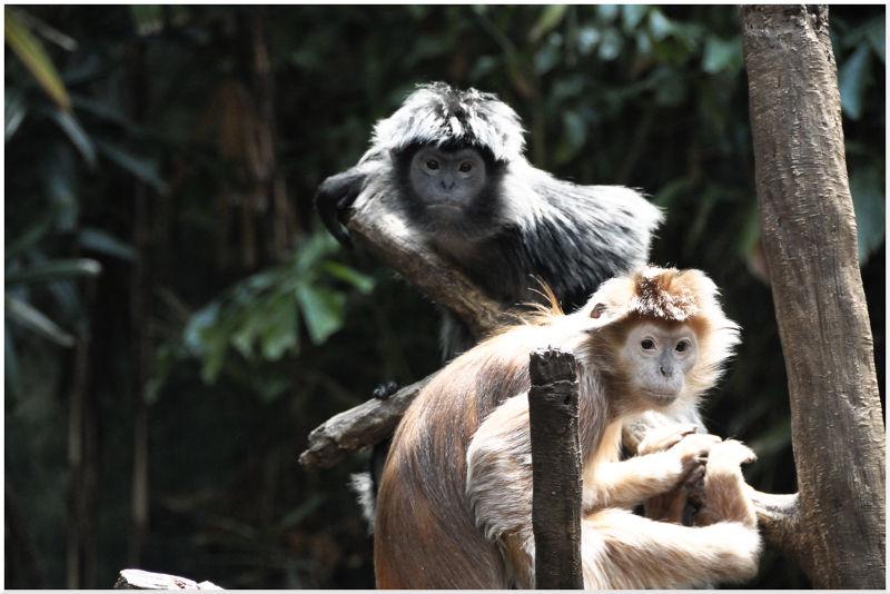 Bronx Zoo Monkey
