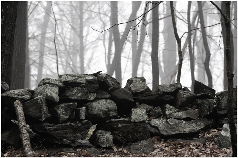 Rock wall in the woods on a misty day.