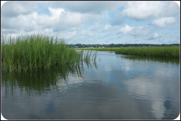 Marsh along the NC Shore