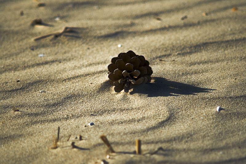 Pinya de platja