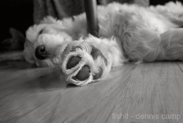 Dog Mop