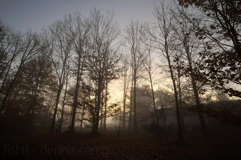 Tealtown Woodlands