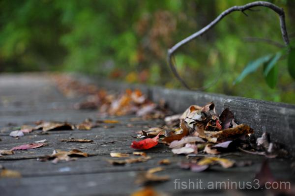 Nature Rubbish