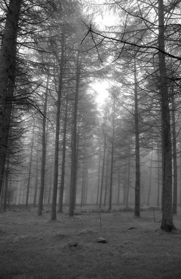 Trees in the mist on Dartmoor