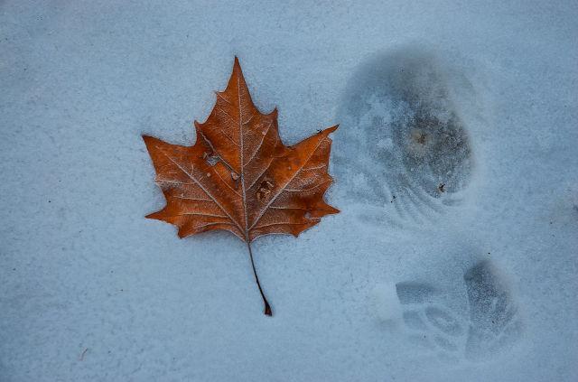 Leaf and Footprint
