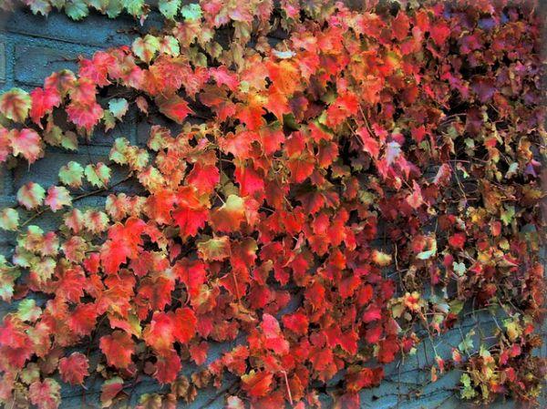 dutch colors by cellinux