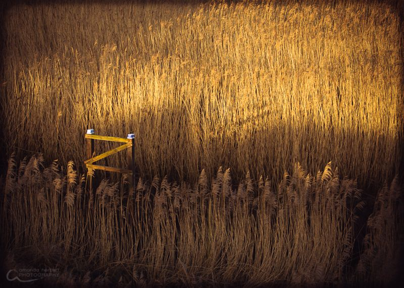 Fine Art Salt Marshes