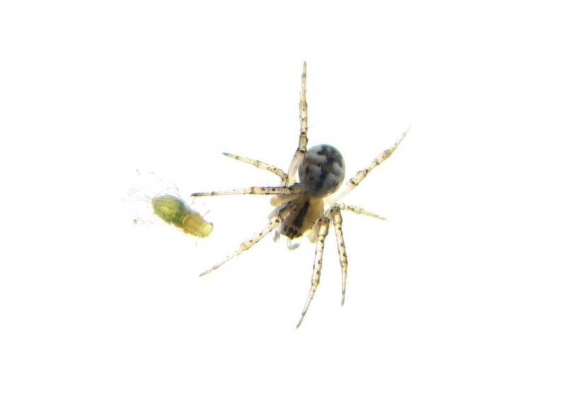 Insects spider