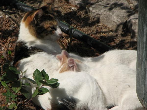 Cat and kittens from Epidavros, Greece