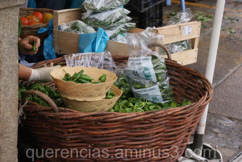 Pimientos de Padrón, Santiago's market.