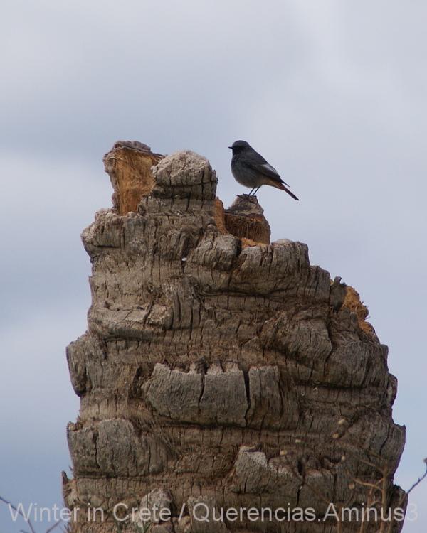 A little bird in La Fortezza, Rethymno. Crete
