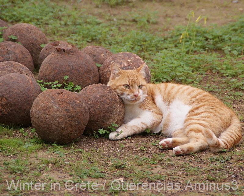 A cat in La Fortezza, Rethymno. Crete
