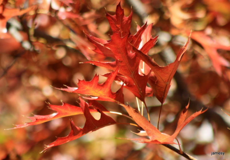 autumn colour I