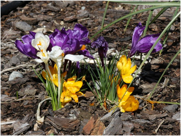 Spring V