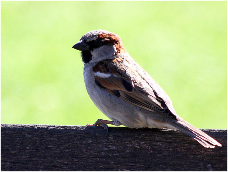 Sparrow on a bench seat