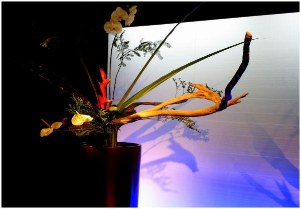 Ellerslie Flower show VII