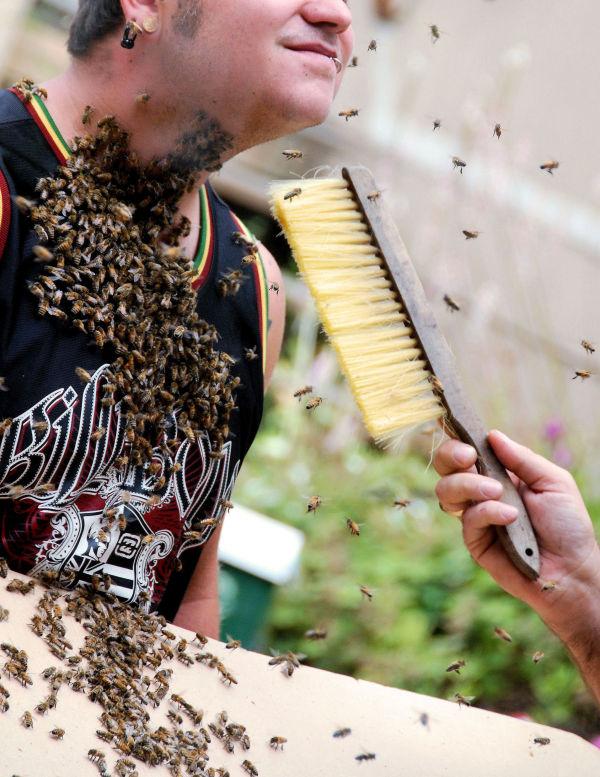 Bee Beard Shave