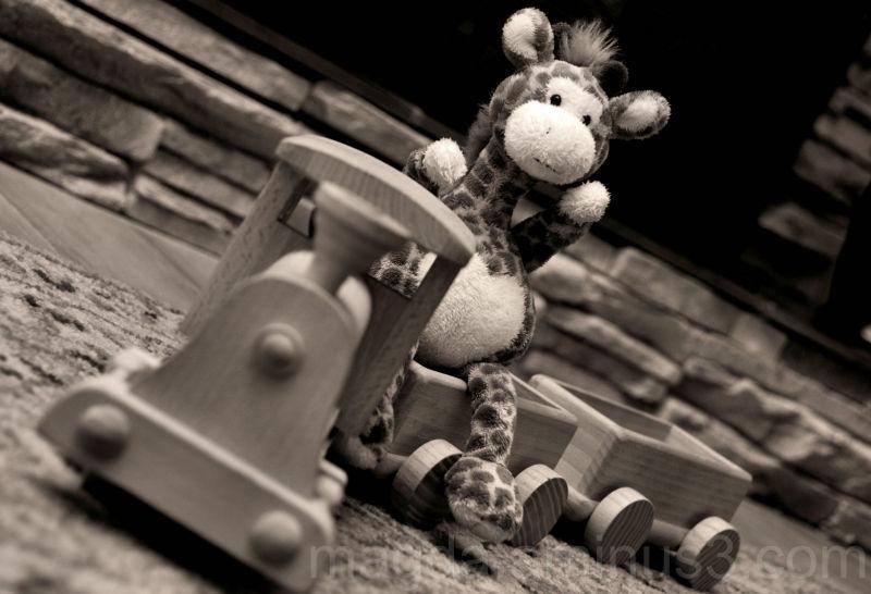 "Giraffe ""train""ing"