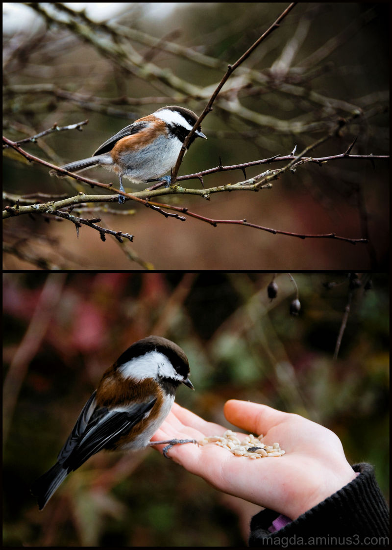 Don't Be Shy My Little Chickadee (3)