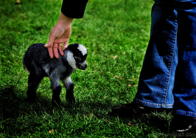 At The Farm (2)