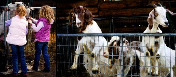 Feed Us!  - At The Farm (5)