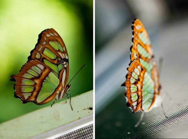 Butterfly Garden  #3