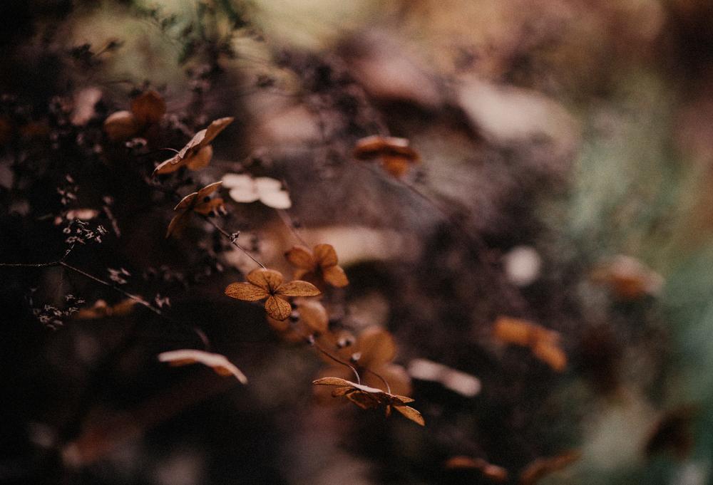 The Warm Tones Of Autumn