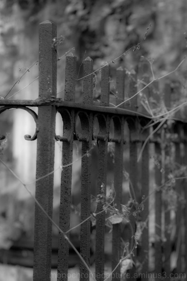 Mystery Fence
