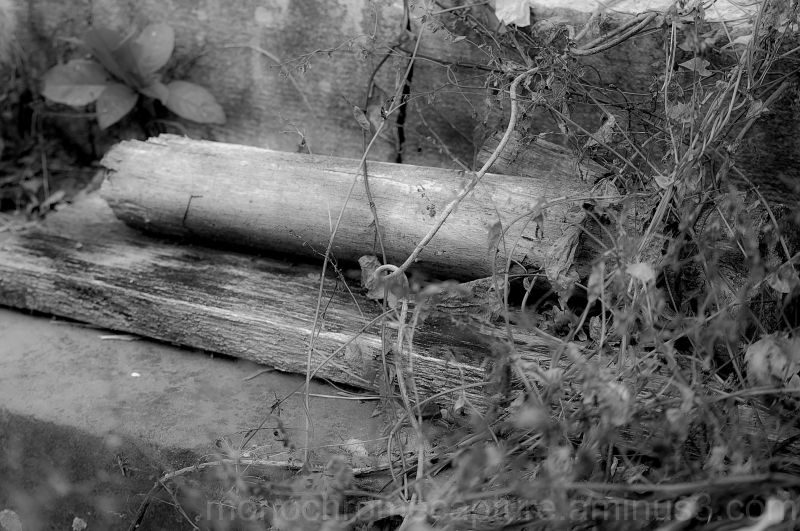 """old, wood, weeds, monochrome, """"black and white"""","""