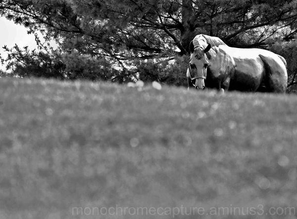 Lexington, horse, statue, black and white
