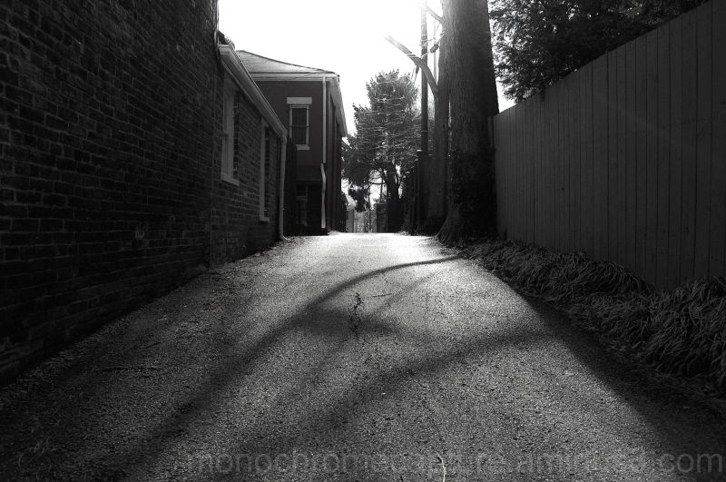 lexington city urban monochrome KY historic