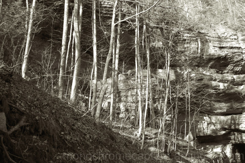 Red River Gorge Wilderness