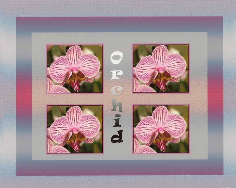 Orchid Montage