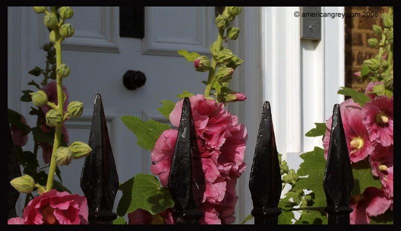 Hollyhocks at the Door