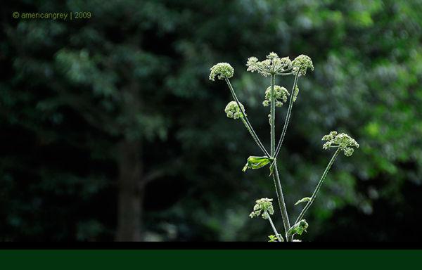 Weeds 1
